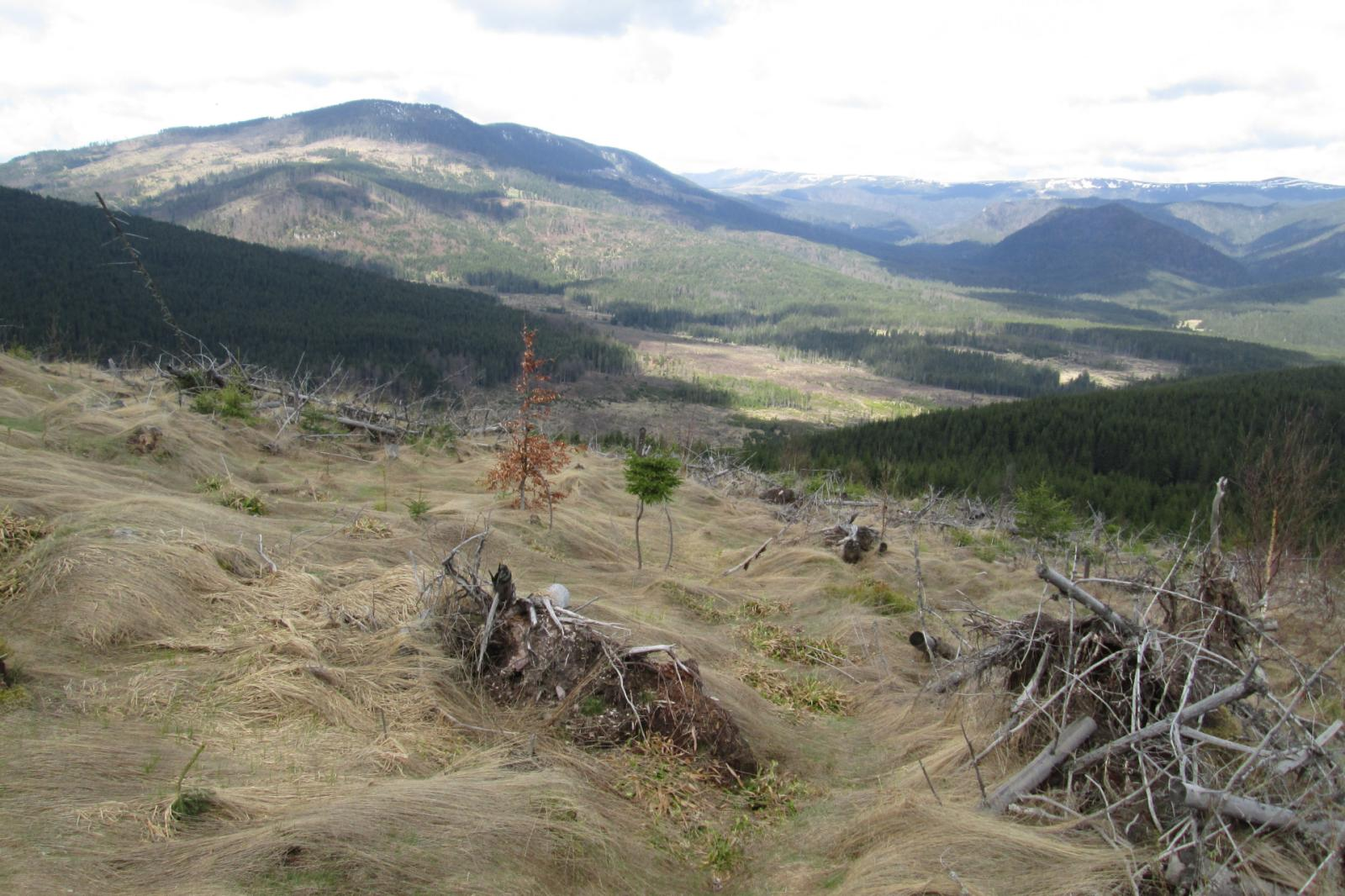 Of the 38 million cubic meters of forest lost to Romania's logging industry each year, only 18 million are licensed and accounted for.